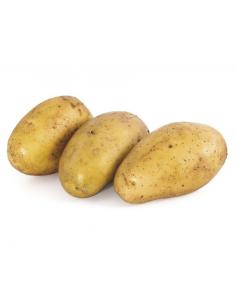 patata kenebec