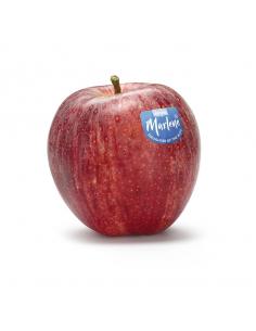manzana fuji Marlene